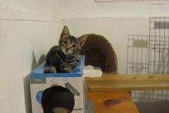 Cats-LeoKitten2