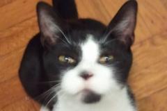 cats-Zorro2